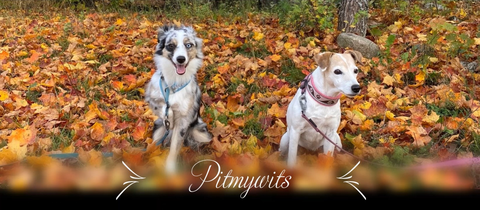 Pitmywits